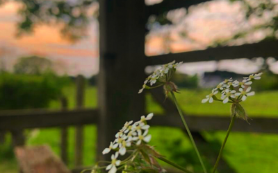 In the picture – our Spring Photography Competition winners